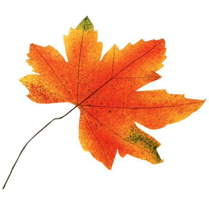 Feuille d'automne 35 cm
