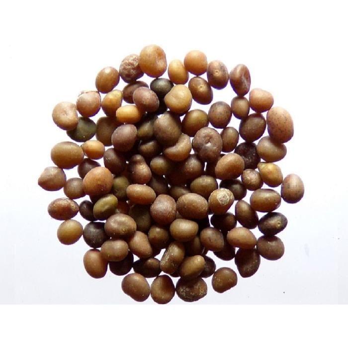 - Alfalfa - Engrais Vert - Green Manu - SEM06 Luzerne Bio Medicago Sativa L