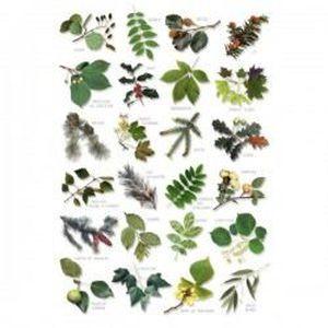 AFFICHE - POSTER Poster Feuilles d'arbre