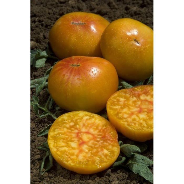 Jardinage / Graine - Semence / Graine - Semence - Tomate ananas