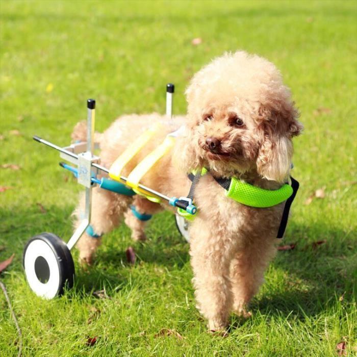 Animal Chariot Fauteuil Roulant 2 Roulettes Corde de Traction Chien Chat Handicapé Postérieurs Auxiliaires Outil Marche Aide L
