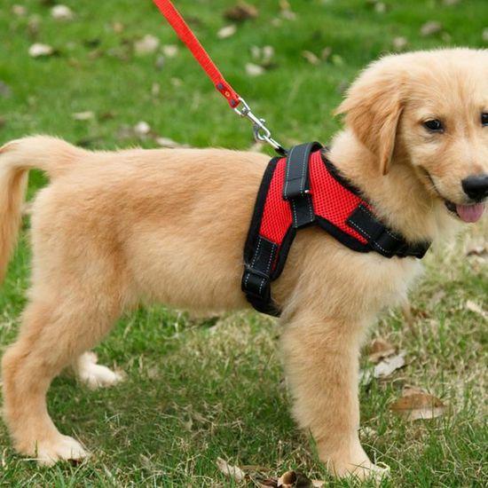 Notre sélection de harnais pour petit chien à moins de 20 euros