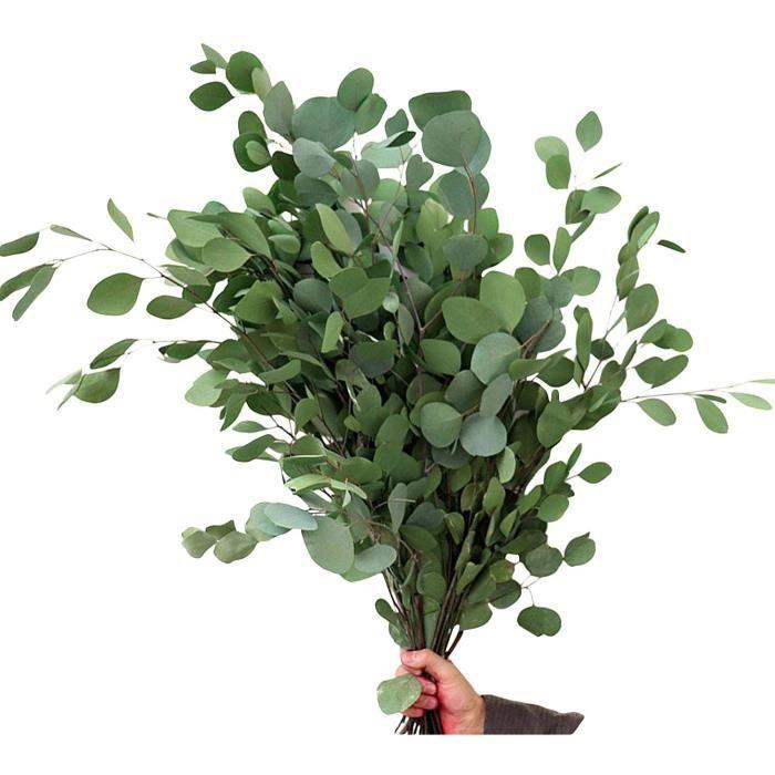 Fleurs séchées Generp Bouquet de feuilles d'eucalyptus Eucalyptus s&eacuteché &eacuteternel Fleur unique et durable de 218