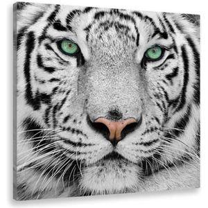 Moderne Noir et Blanc Jungle Animal Sauvage Lion Tigre L/éopard Toile Peinture Salon Mur Photo D/écoration Affiche-50x50cm No Frame