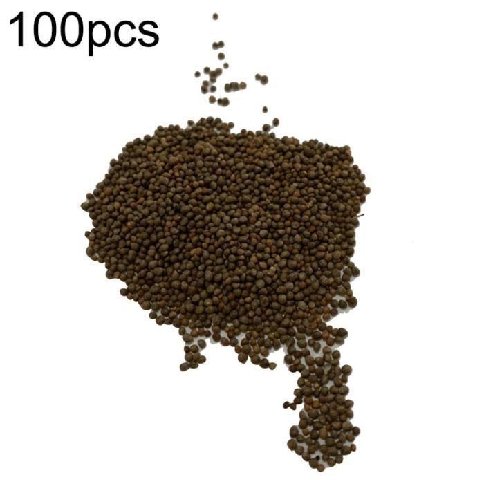 Beta vulgaris BIO 50 graines Betterave Jaune SAFLAX