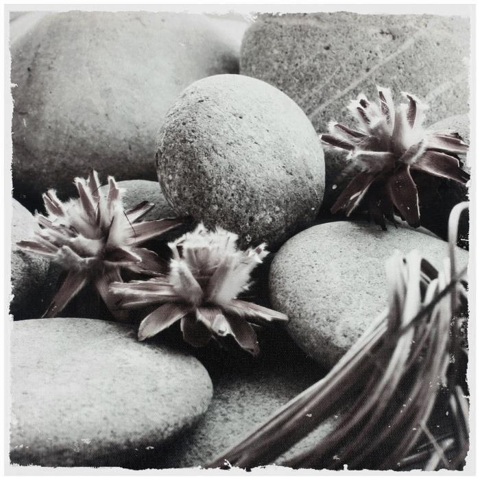 Tableau Toile Cadre Zen Colllection Galets Rétro Avec Fleur De Mer Rose 28x28cm Noir