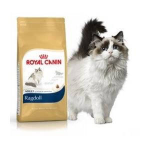 CROQUETTES Feline Nutrition Ragdoll - Royal Canin