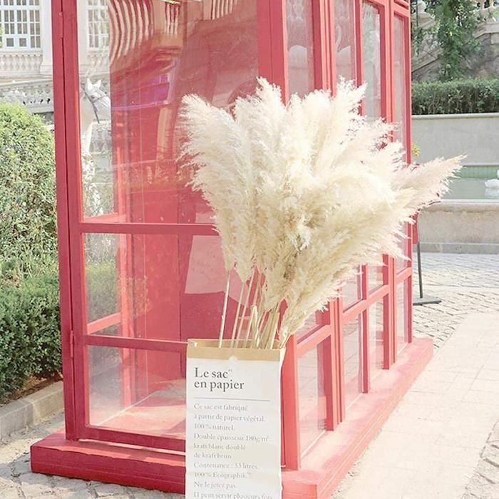 Fleurs séchées White 120cm Grands Pampas Grass 10 tiges, herbe de pampa s&eacutech&eacutee naturelle pour arrangements de fleu20