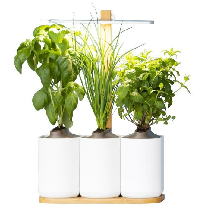 Lilo, le potager d'intérieur de Prêt à Pousser - Nouvelle Generation - Cultivez toute l'année - Inclus Basilic, Menthe, Ciboulette