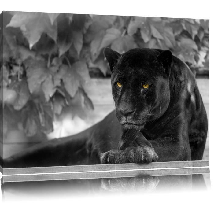 Toile Imprime Noir Panthere Noire Blanche Completement