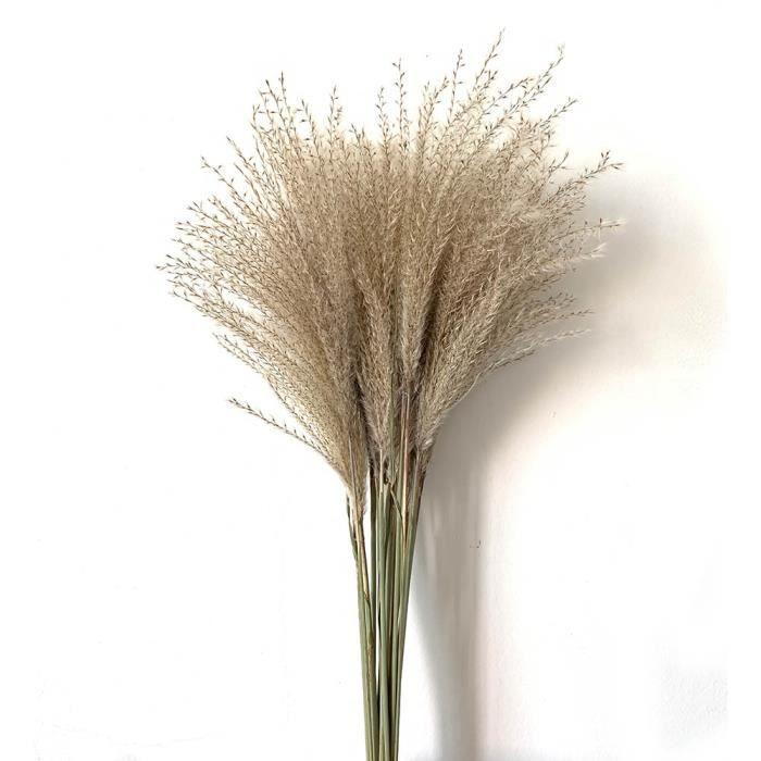 Pampas herbe décor blanc-rose utilisation de mariage décor à la maison pampas herbe plantes séchées - 20pcs Raw Color-S