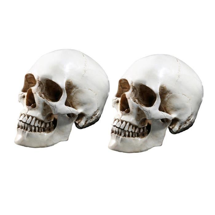 2 pièces modèle de crâne humain résine réaliste créative tête humaine os squelette moule pour traçage anatomique OBJET DECORATIF