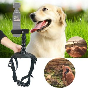 DRONE Chien de chien de compagnie de chien de compagnie