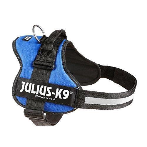 Julius-K9 Color /& Gray Harnais de Courroie didentification Couleur : n/éon Taille : 1 Gris 290 g