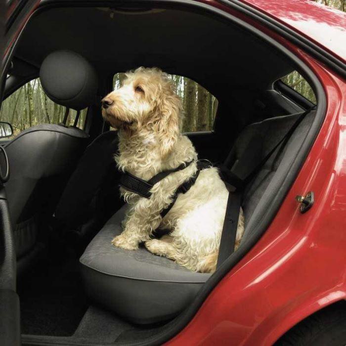 Harnais ceinture de securite pour chien