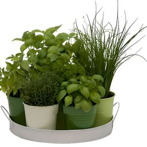 PLANTE POUSSÉE Plateau 7 herbes aromatiques