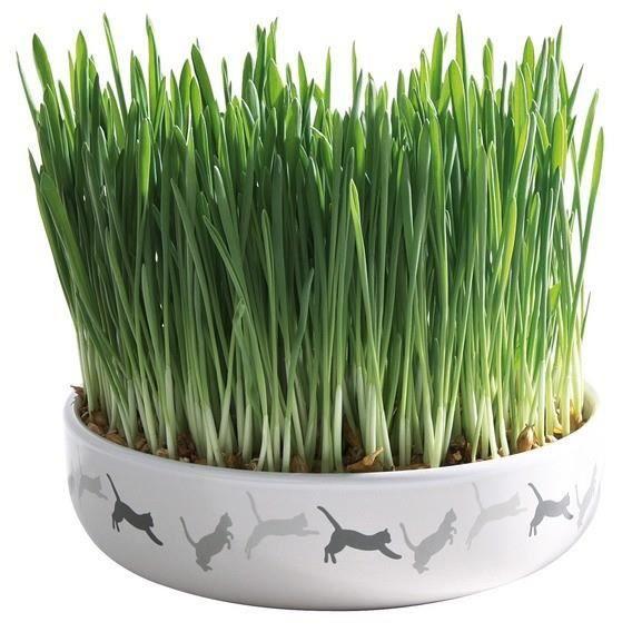 Ecuelle en céramique avec herbe à chats