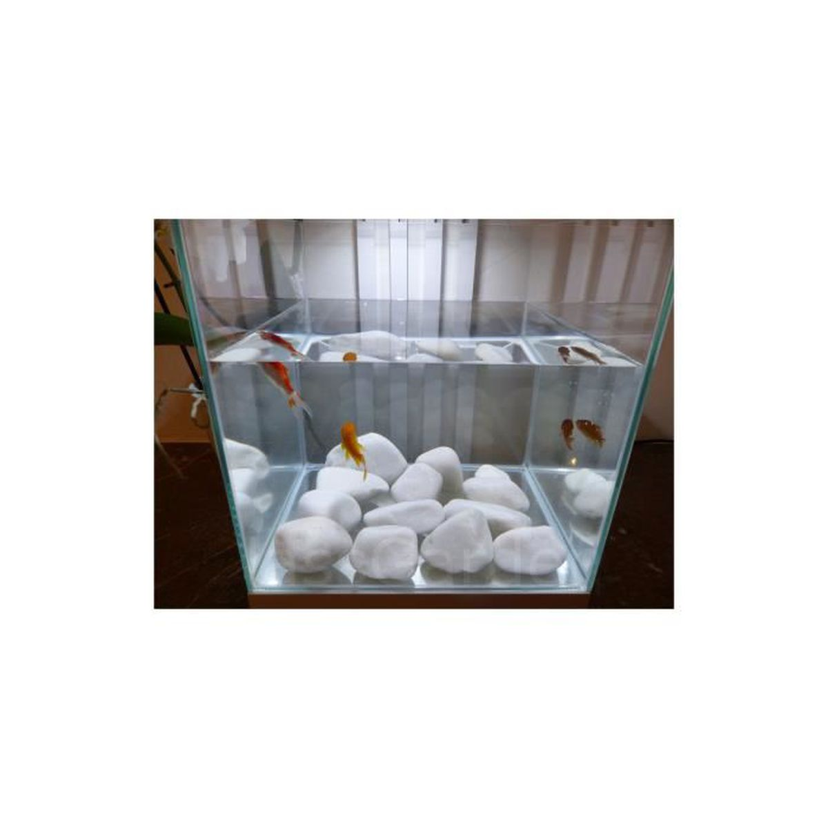 Galet blanc aquarium 20 40 mm achat vente d co for Achat galet blanc