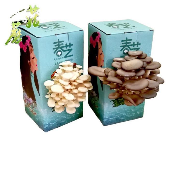 Paquet de plantation de boîtes de champignons, adapté aux enfants pour cultiver des souches de champignons comestibles