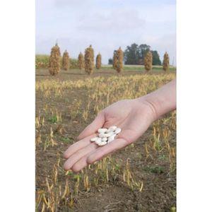Jardinage Graine Semence Graine Semence Haricot Nain à écosser Flageolet Blanc De Flandres 90g