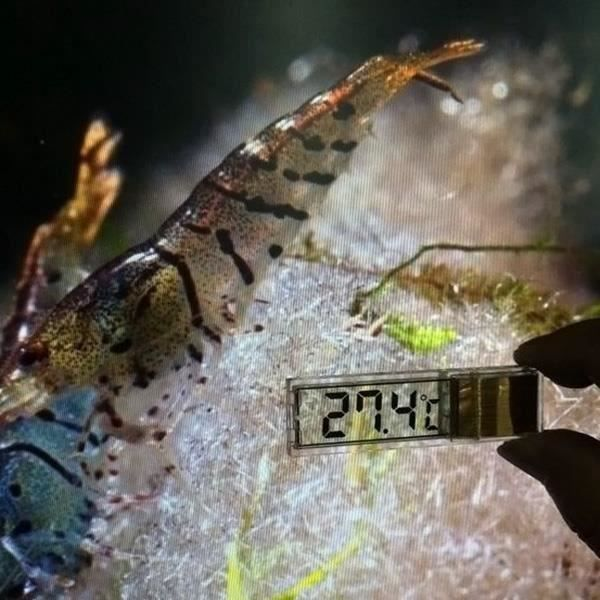 Multi-fonction LCD 3D numérique électronique température mesure poisson aquarium thermomètre thermomètre d'aquarium