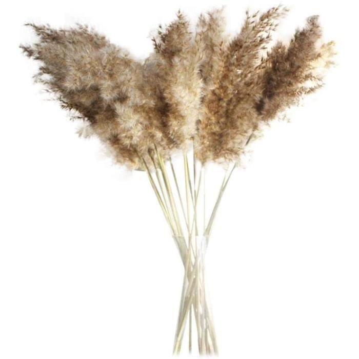 PLANTE ARTIFICIELLE 30PCS Fleurs S&eacutech&eacutees Naturelles Fleur de Pampa Herbe de Pampa S&eacutech&eacutee Roseaux S&e582