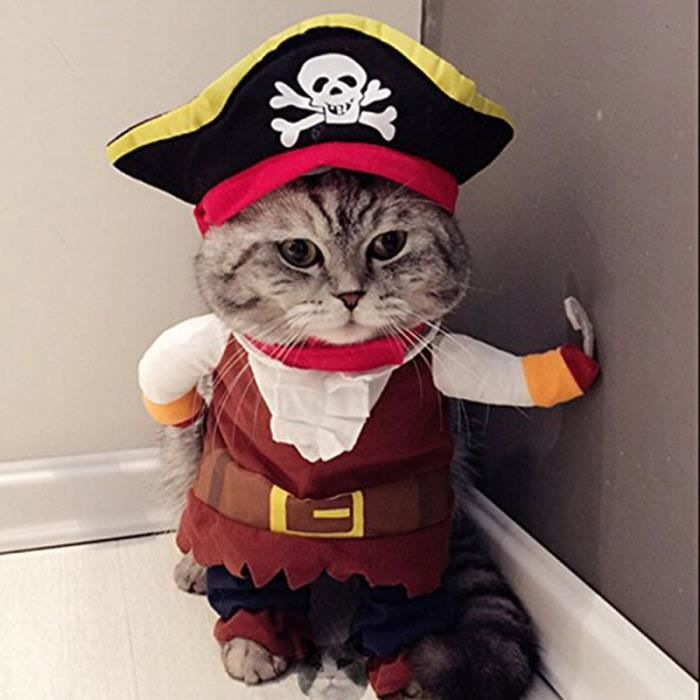 déguisement halloween chat pirate