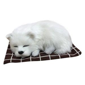 JEU D'APPRENTISSAGE JEUX DE SOCIETE Peluche mignonne chien doux animau