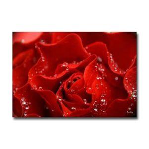 TABLEAU - TOILE Plexiglass floral rose de rosée  89 x 130 cm