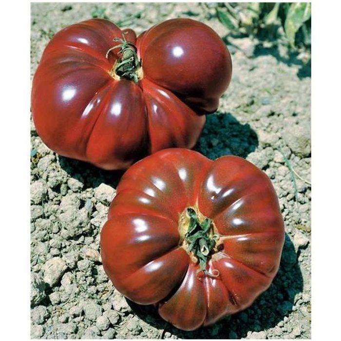 Tomate de grande hauteur Noire de Crimée 0.1g