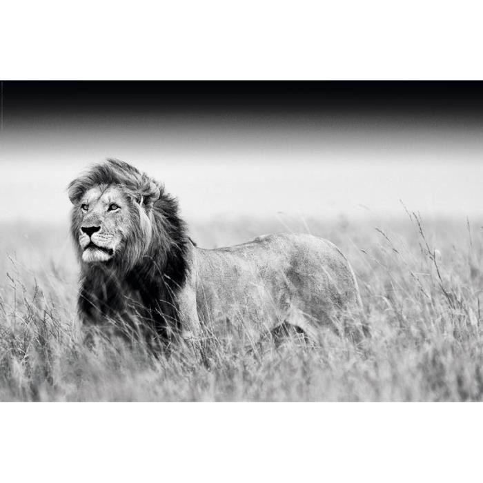 poster lion en noir et blanc achat vente affiche cdiscount. Black Bedroom Furniture Sets. Home Design Ideas
