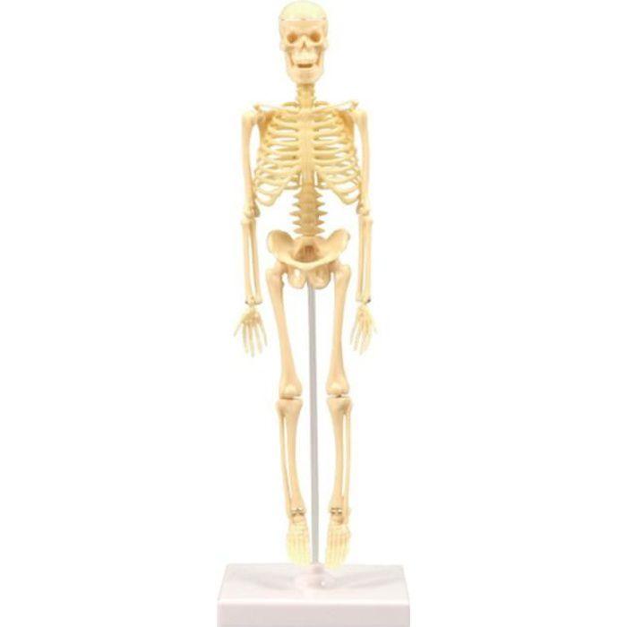 Modèle anatomique du squelette humain - 35 cm