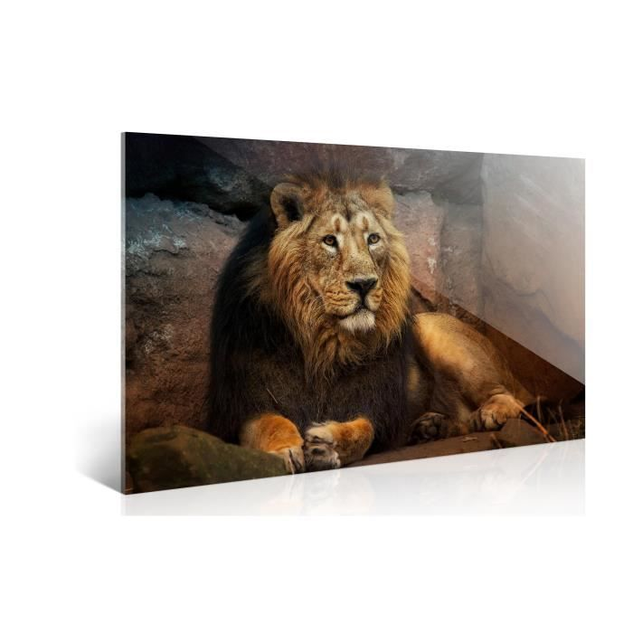 tableau d co sur plexiglas lion n 6 90x60cm achat vente tableau toile plexiglas toile. Black Bedroom Furniture Sets. Home Design Ideas