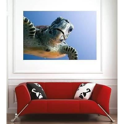 affiche poster d coration murale tortue r f 2495900 6 dimensions d clinaisons papier mat. Black Bedroom Furniture Sets. Home Design Ideas
