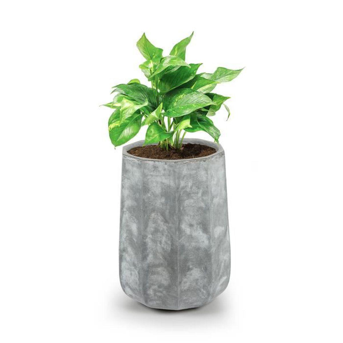 Bac Pour Arbuste De Jardin blumfeldt decaflor bac à fleurs ou plantes - jardinière pour