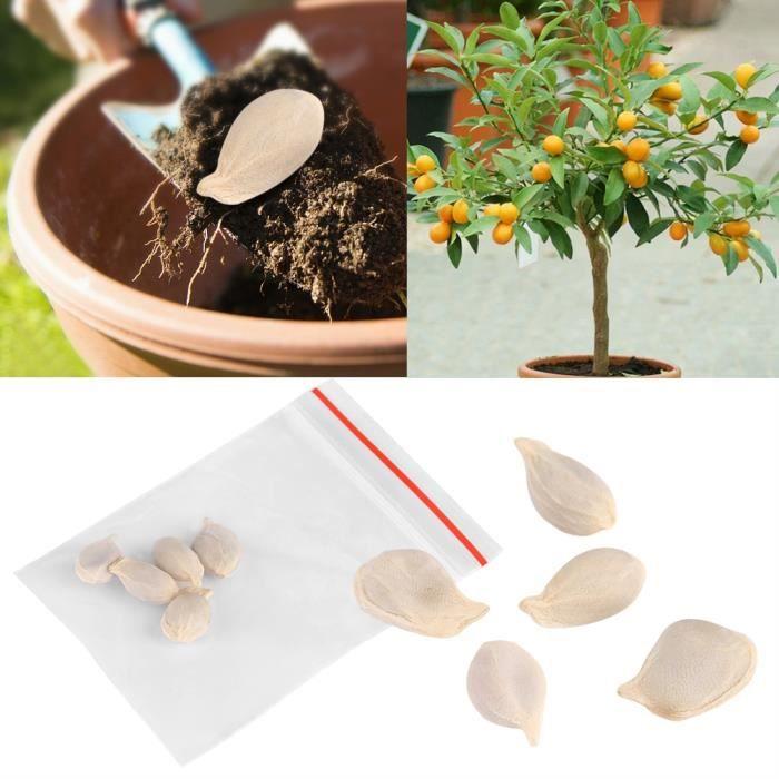 Graine semence 10 paquets de plantes en pot fruits mini bonsaï graines d'oranger jardin balcon décor-LAF