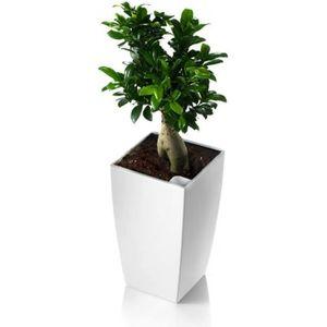 JARDINIÈRE - POT FLEUR  Pot carré Blanc avec réserve d'eau 26 cm ALGRAVE