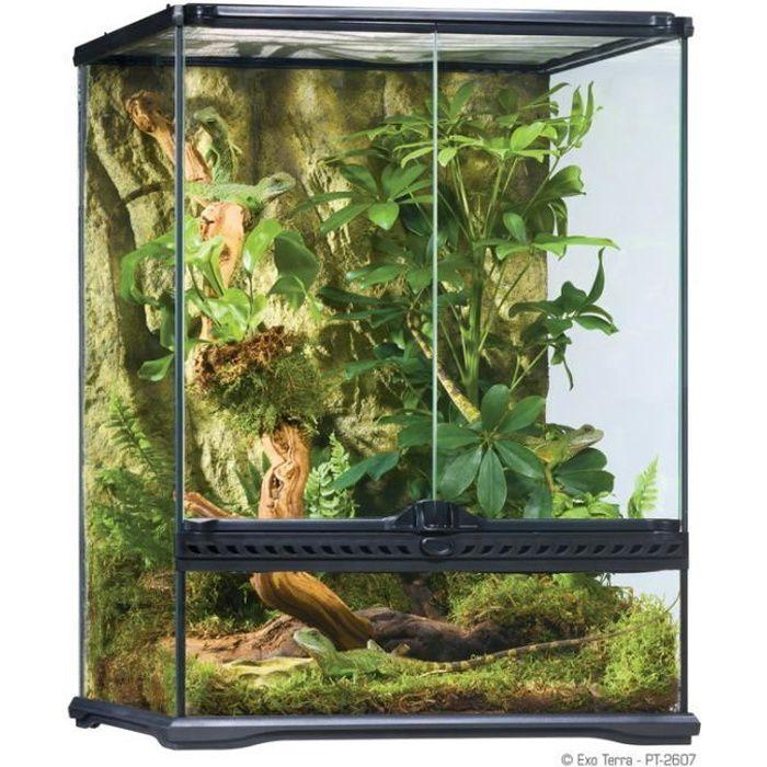 Terrarium verre