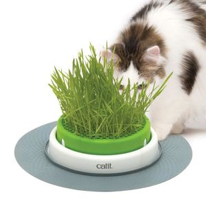 KIT HYGIÈNE LITIÈRE Jardin Herbe Pour Chat Catit Senses 2.0