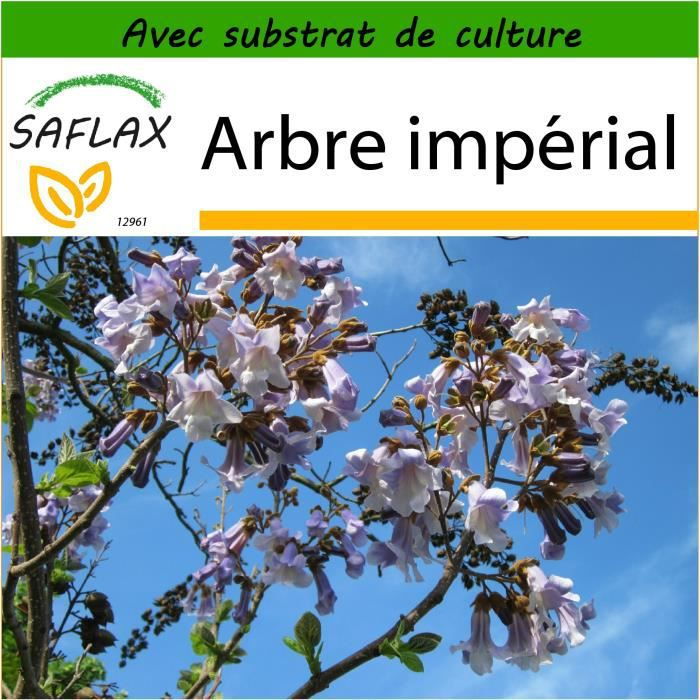 SAFLAX - Arbre impérial - 200 graines - Avec substrat - Paulownia tomentosa