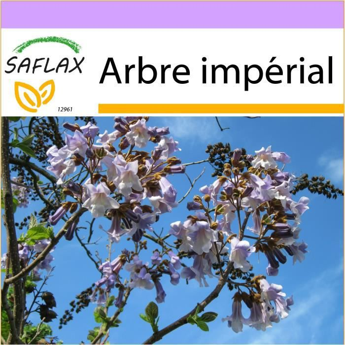 SAFLAX - Arbre impérial - 200 graines - Paulownia tomentosa