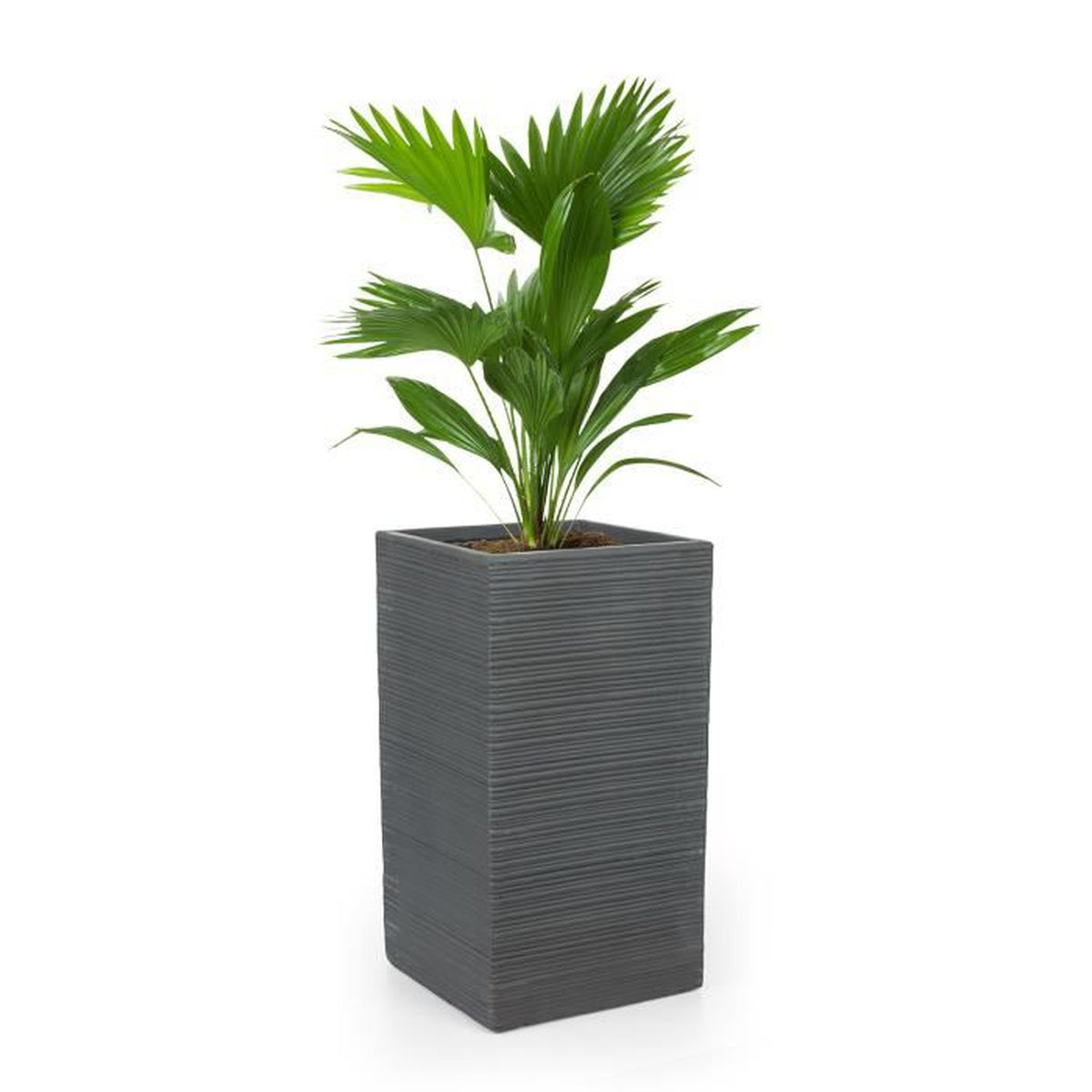 Bac Pour Arbuste De Jardin blumfeldt luxflor - pot de fleurs jardinière - 35 x 65 x 35 cm - fibre de  verre aspect béton - intérieur-extérieur- gris foncé