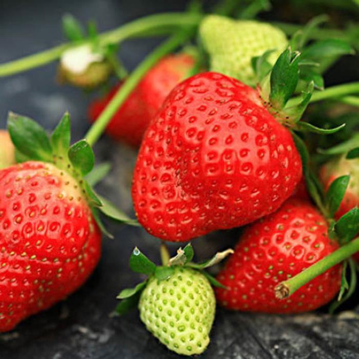 Graine semence graines de fraise 300pcs- pack