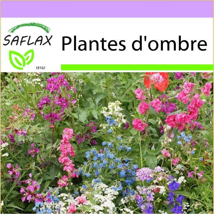 SAFLAX - Plantes d'ombre - 1000 graines - 19 Variétés