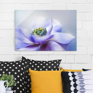 CADRE PHOTO 80x120 cm image glass - anemone de caen - cross-2: