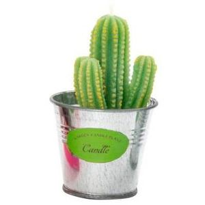 cactus en pot achat vente cactus en pot pas cher cdiscount. Black Bedroom Furniture Sets. Home Design Ideas