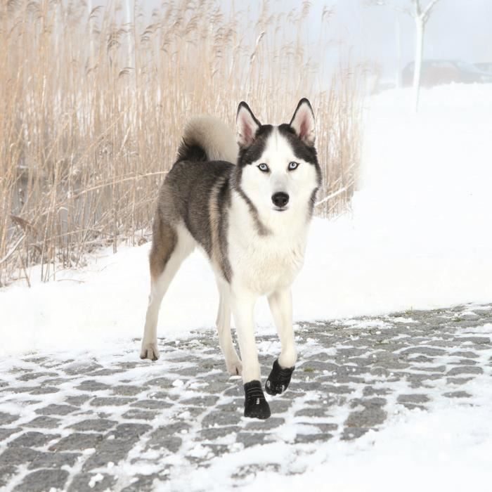 TRIXIE Bottes de protection Walker Active 2 pièces L - Noir - Pour chien