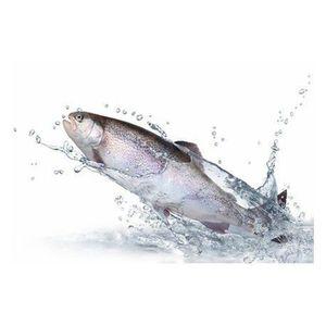 POISSON ENTIER Truite rose saumonée portion colis de 3  kg (Oncho