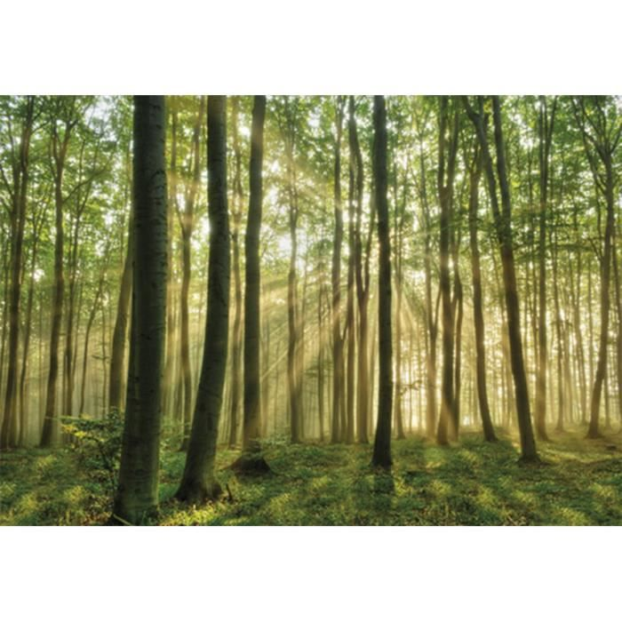 Poster mural nature achat vente pas cher for Poster mural pas cher