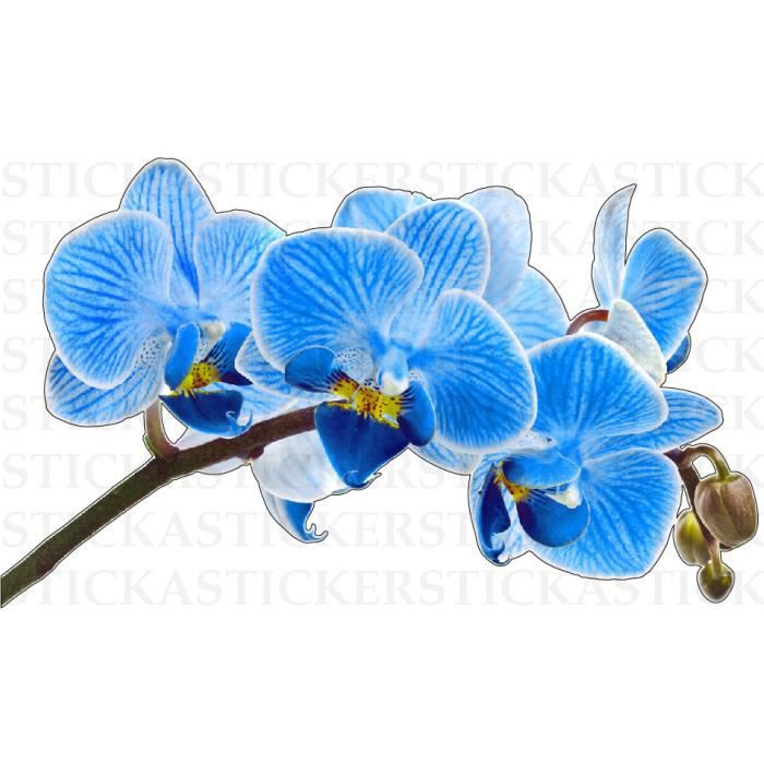 orchidee bleue conseil